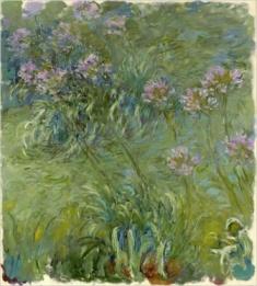 Monet's Agapantus