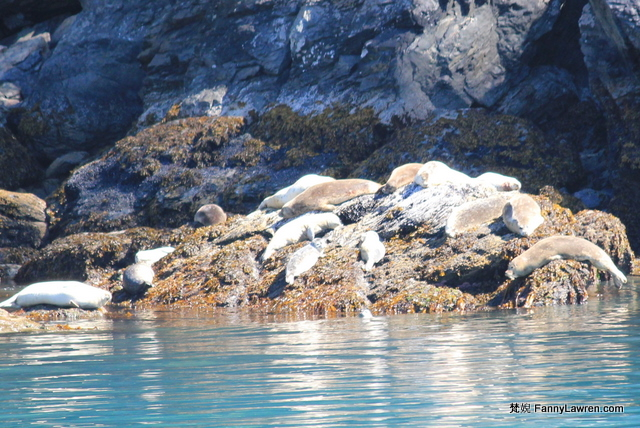 Alaska Kenai Fjords National Park Wildlife Animal 阿拉斯加奇奈峽灣國家公園野生海洋動物