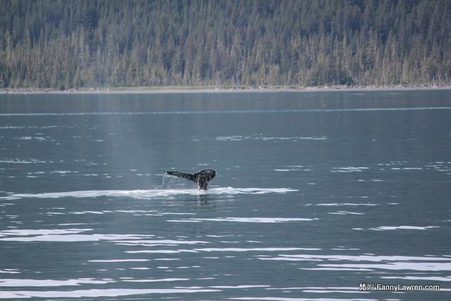 Alaska Prince William Sound National Park Wildlife Animal 阿拉斯加威廉王子灣國家公園野生海洋動物