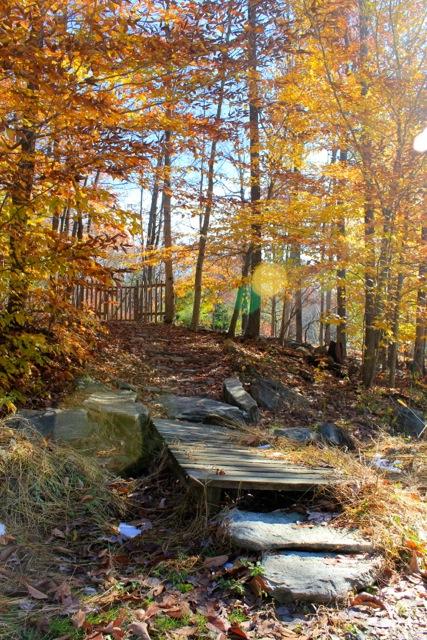 在寺院的另一邊,林木河池,詩情畫意。